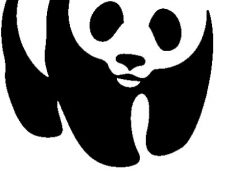 Climate Policy Intern, World Wildlife Fund – Remote